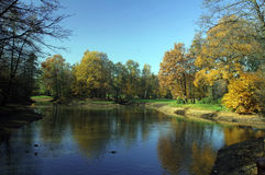 Forêt et lac Images stock