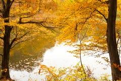 Forêt et lac colorés d'automne Images stock