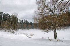 Forêt et lac dans la neige pendant l'hiver Image stock