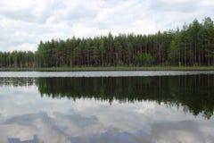 Forêt et lac de pin Photo stock