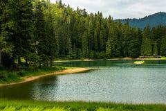 Forêt et lac de pin près de la montagne tôt le matin images stock