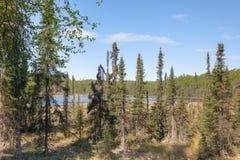 Forêt et marécages Images stock
