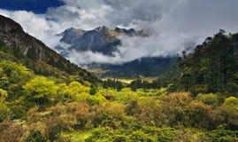 Forêt et montagne photographie stock