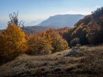 Forêt et montagne Image libre de droits