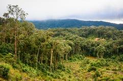 Forêt et montagne dans Dalat, Vietnam Photo stock