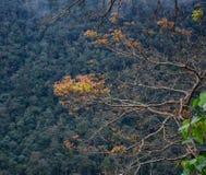 Forêt et montagne dans Dalat, Vietnam Photo libre de droits
