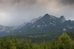 Forêt et montagnes Photo stock