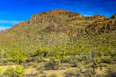 Forêt et montagnes dans Sedona, Arizona Images stock