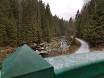 Forêt et neige Image libre de droits