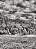 Forêt et nuages en noir et blanc Photos stock