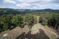 Forêt et ombre de château sur le pré Images stock