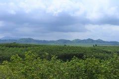 Forêt et paysage de vue Photographie stock libre de droits