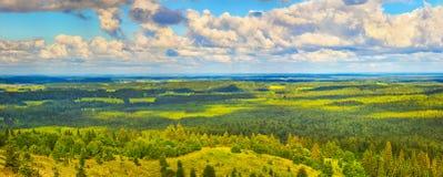 Forêt et prés coniféres Panorama Image libre de droits