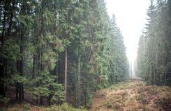Forêt et regain Images stock