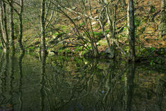 Forêt et rivière Photographie stock