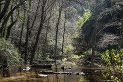 Forêt et rivière Images stock