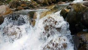 Forêt et rivière dans les montagnes banque de vidéos
