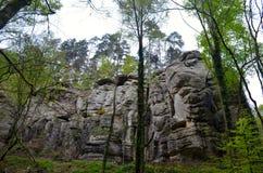 Forêt et roches Photo libre de droits