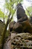 Forêt et roches Image libre de droits