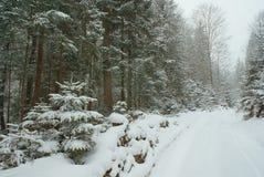 Forêt et route vide avec la neige profonde couverte Photos stock