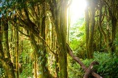 Forêt et soleil Photographie stock