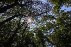 Forêt et soleil verts sur le ciel bleu, concept de nature photo libre de droits