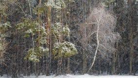 Forêt et tempête de neige mélangées foncées banque de vidéos