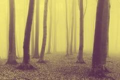 Forêt et traînée brumeuses de conte de fées par les feuilles Image libre de droits