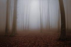 Forêt et traînée brumeuses de conte de fées par les feuilles Photo libre de droits