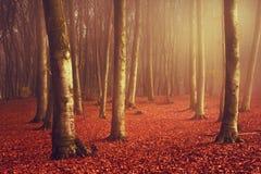 Forêt et traînée brumeuses de conte de fées par les feuilles Images stock