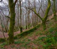 Forêt et vieux mur en pierre Images libres de droits