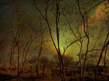 Forêt exotique images libres de droits
