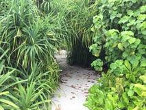 Forêt exotique tropicale avec le chemin de sable Photo libre de droits