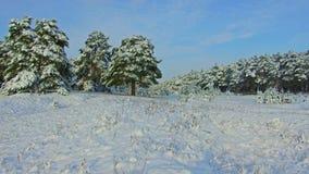 Forêt fabuleuse d'hiver, tempête de neige dans la forêt d'hiver de pin, tempête de neige dans la forêt, Forest Trees In Snow Stor images libres de droits