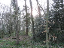 Forêt fantasmagorique de lumière du jour Photos libres de droits