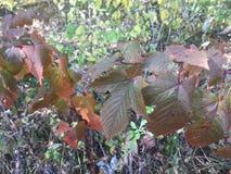 Forêt, feuilles Photo libre de droits