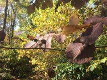 Forêt, feuilles d'automne brunes pâles, plan rapproché Image stock