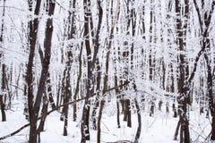 Forêt figée photo stock
