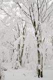 Forêt figée Photographie stock