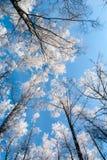 Forêt figée Images stock