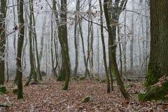 Forêt figée Photographie stock libre de droits