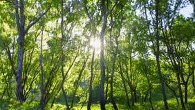 Forêt fleurissant au printemps Photos libres de droits