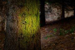 Forêt foncée Image libre de droits