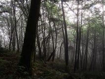 Forêt foncée Photos stock