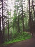 Forêt foncée image stock