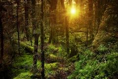 Forêt foncée au coucher du soleil Photographie stock libre de droits