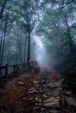 Forêt foncée dans les montagnes de Bieszczady images libres de droits