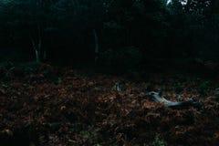 Forêt foncée effrayante de montagne en Afrique Photo stock