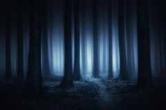 forêt foncée et effrayante la nuit photos libres de droits