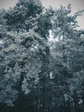 Forêt foncée, neige d'hiver Images stock